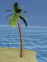 palmtrees leafs levels 3d model