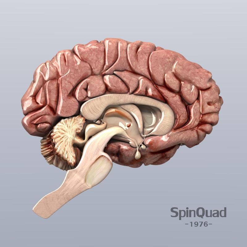 ts_brain_A.jpg