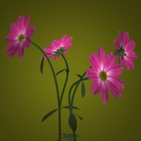 aster flower pot pl 3d 3ds