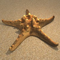 3d model starfish decorating
