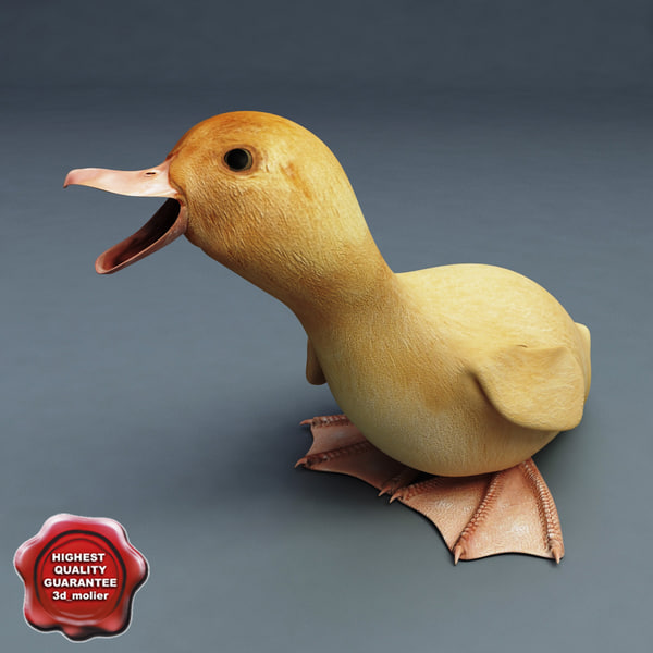 Duckling Pose5