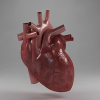 Anatomy_heart
