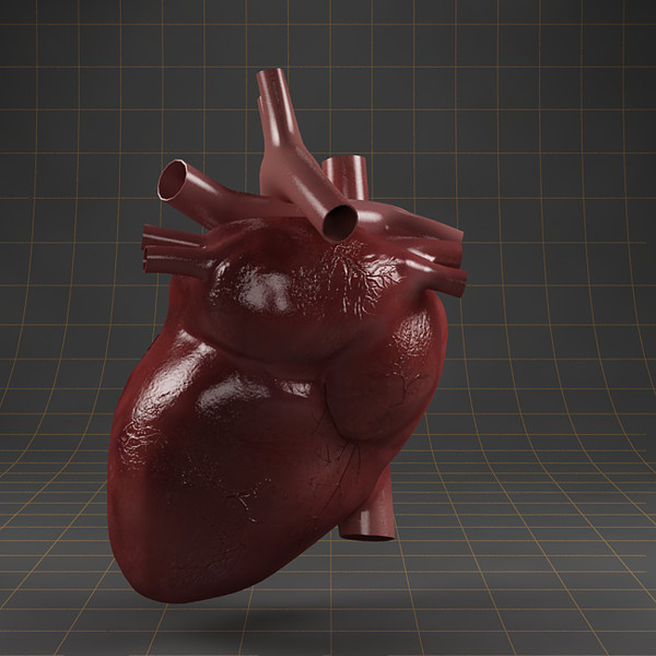 3d model heart organ - Anatomy_heart... by ArtStudio3d