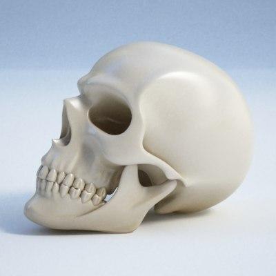 skull_0000.jpg