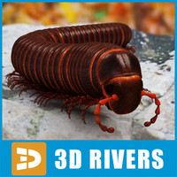3d giant archispirostreptus gigas model