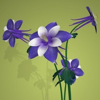 PL Columbine, Purple and White