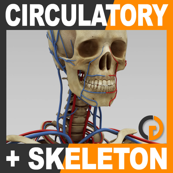 CircSkeleton_th001.jpg