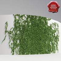 Wall with ivy V1