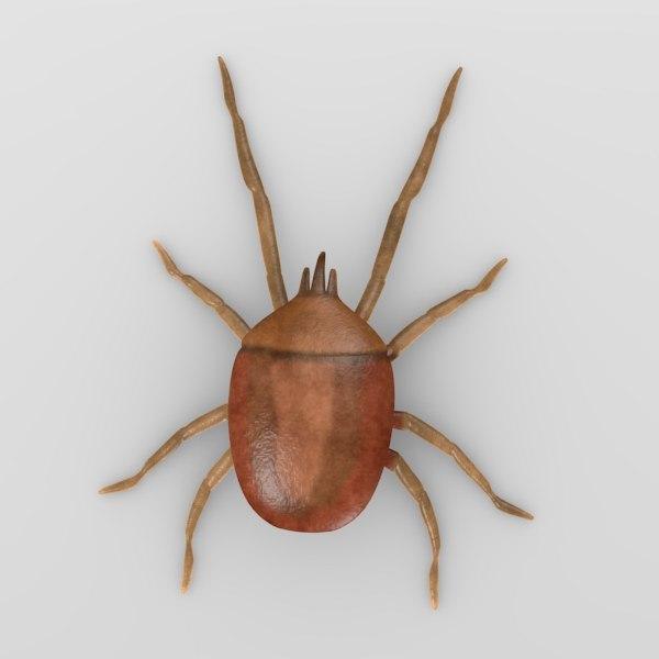 mite5-bryobia praetiosa(clover mite)