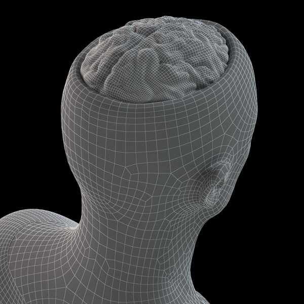 skull brain 3d lwo - Head and Brain... by PolyTron