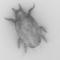 tyrophagus putrescentiae 3d 3ds