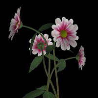 daisy flower pl 3d obj