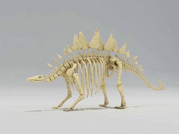 Dino Stegosaurus Skeleton