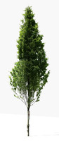3d tree 18 model