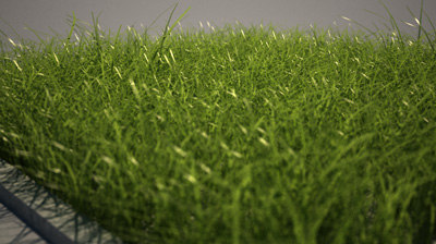 Pictures of Blade Of Grass Texture - #rock-cafe