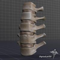 3dsmax human lumbar vertebrae