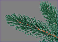 3d model of branch fir