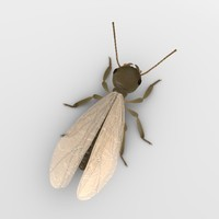 termite alate 3d model