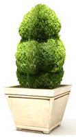 3d model plant 29