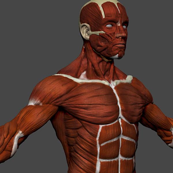 Muscles_06.jpg