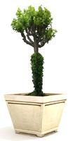 3d plant 25 model