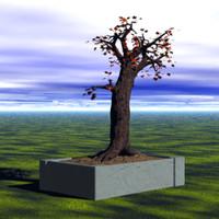 free bonsai 3d model