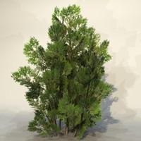 3d pc bush model