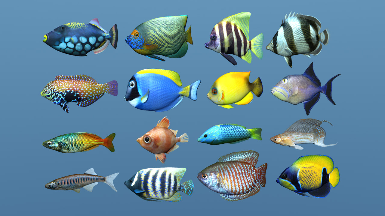 fishAllRender copy.jpg