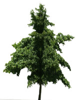 3d model tree 3