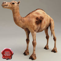 camel modelled 3d model