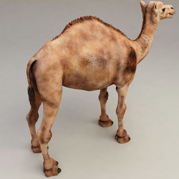camel modelled 3d model - Camel... by 3d_molier
