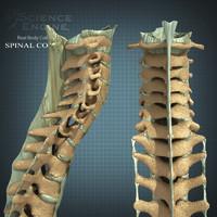 maya human spine