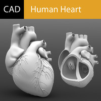 human heart solidworks 3d model