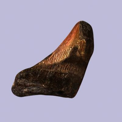 Sharks Tooth0278.jpg