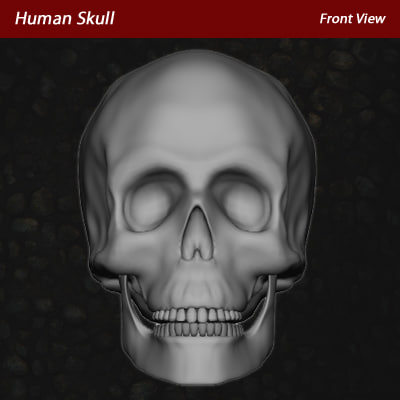 skull_screenshot_frontview.jpg