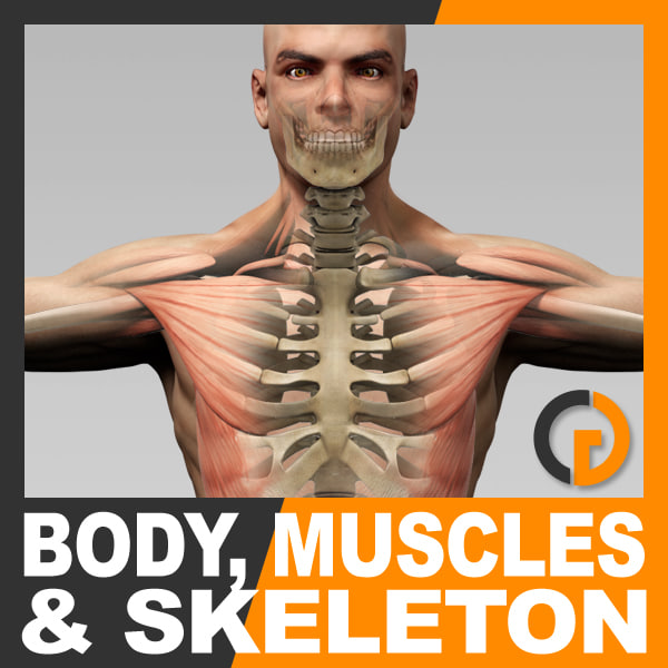BodyMuscSkel_th001.jpg