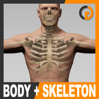 Human Male Body and Skeleton - Anatomy