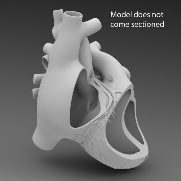 3d model human heart - Human Heart... by ID Guy