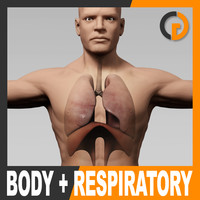 Human Male Body and Respiratory System - Anatomy