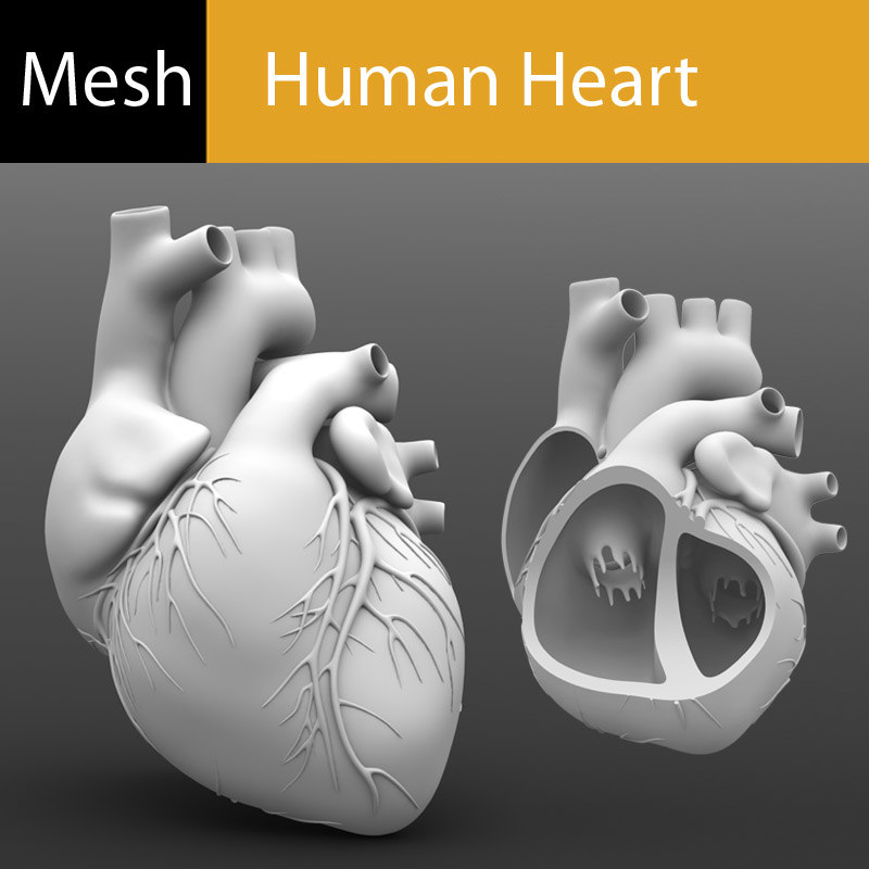 Main Preview Human Heart Mesh.jpg