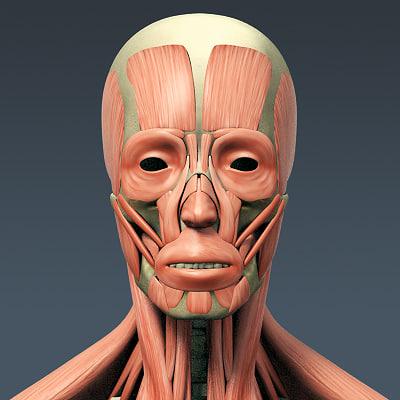 Face study - 3D model by zaiilex (@zaiilex) - Sketchfab