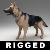 German shepherd rigged