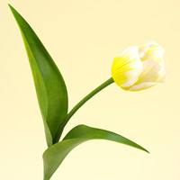 3ds tulip