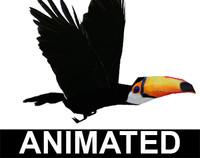toucan bird 3d model