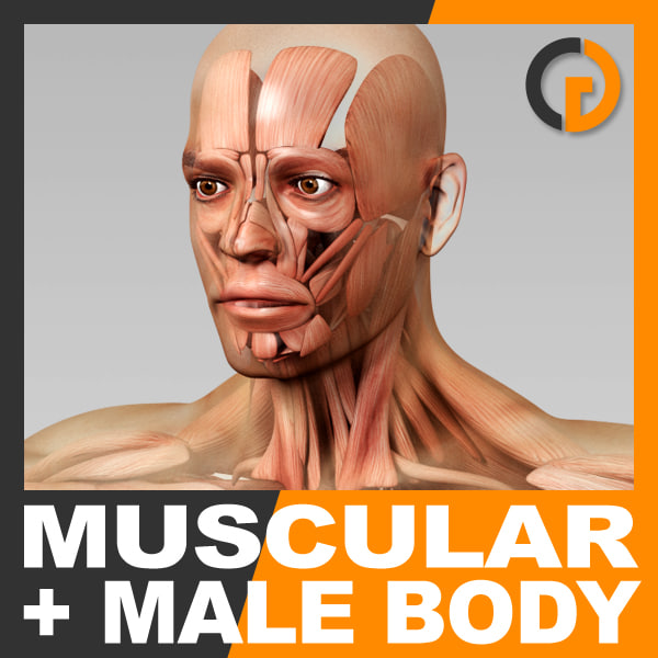 BodyMusc_th01.jpg