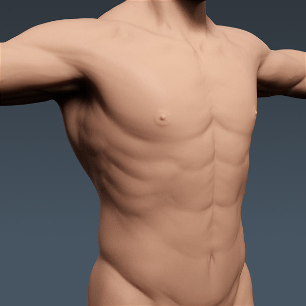 anatomically human male body 3ds - Human Male Body and Nervous System - Anatomy... by cgshape