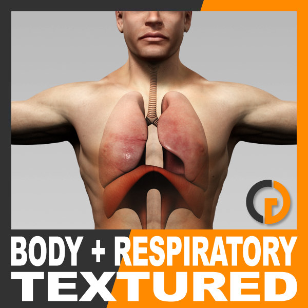 BodyRespTex_th01.jpg