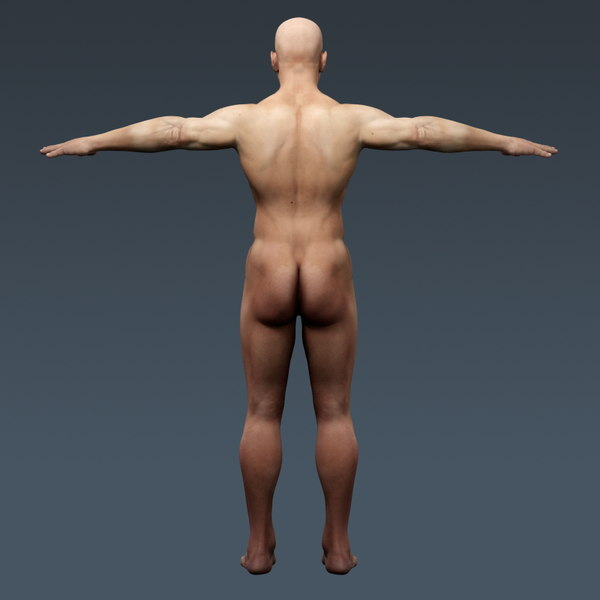 anatomically human male body 3d model - Human Male Body and Respiratory System Textured - Anatomy... by cgshape