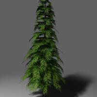 conifer tree 3ds