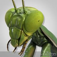 maya mantis religiosa 1